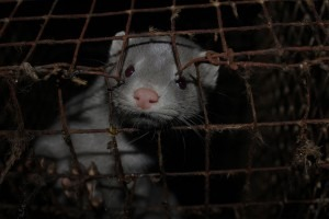British Icons encourage Harvey Nichols to drop fur for good